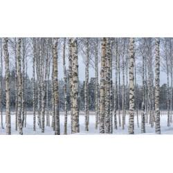 Björksläktet Frön (Betula) 1.95 - 4