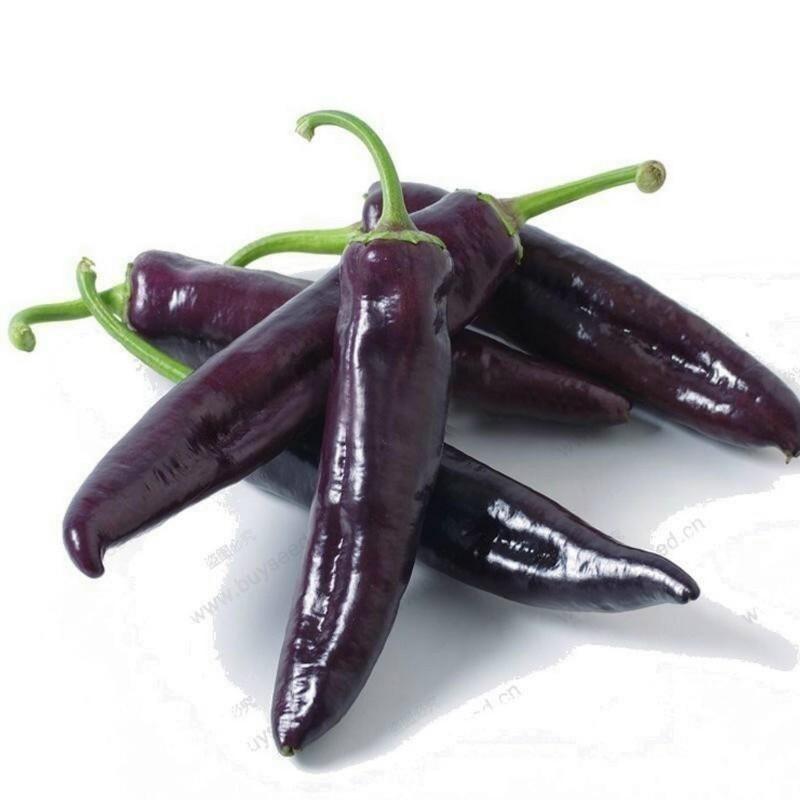 MARCONI PURPLE Sweet Pepper Seeds 1.65 - 1