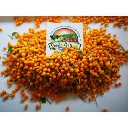 Graines de Piment Charapita 2.25 - 5