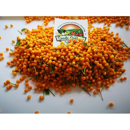 5 Fresh Charapita Fruits with Seeds - Limited time offer 10 - 3