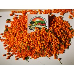 5 Fresh Charapita Fruits with Seeds - Limited time offer 10 - 4