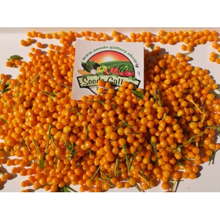 5 Fresh Charapita Fruits with Seeds - Limited time offer 10 - 5