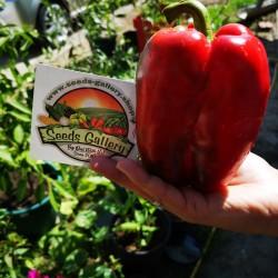 Red Monster Giant Sweet Pepper Seeds 1.85 - 2