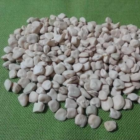 Indian Pea, Blue Sweet Pea Seeds (Lathyrus sativus) 1.85 - 4