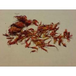 Safflower Seeds (Carthamus tinctorius) 1.95 - 10