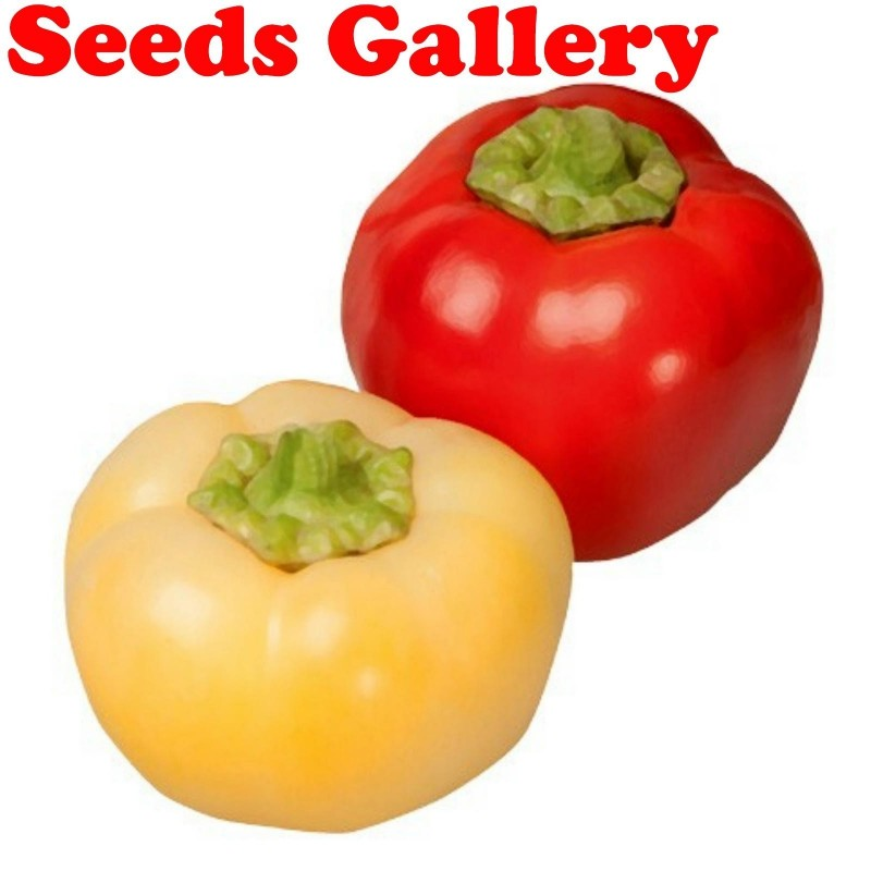 Sweet Pepper Seeds ''Novosadjanka'' 1.85 - 1