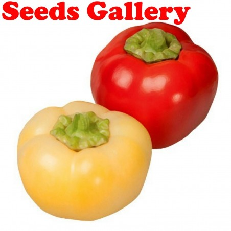 Novosadjanka söt paprika frön 1.85 - 1