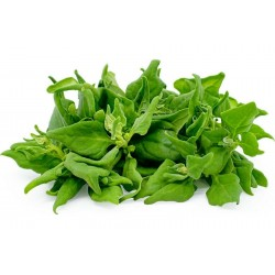 New Zealand Spinach Seeds (Tetragonia tetragonoides) 1.85 - 1