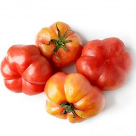 Semillas de Tomate Montserrat 1.95 - 2