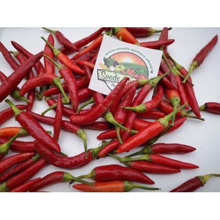 Serbian Mini VEZANKA Chili Seeds 1.95 - 3