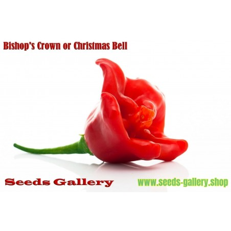 Sementes de Pimentas Chili Bishop Crown