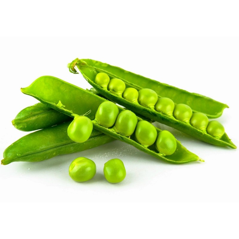 Garden Pea Seed AMERICAN WONDER 1.15 - 1
