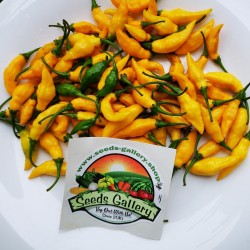 Graines De Piment Yellow Pointy 1.75 - 2