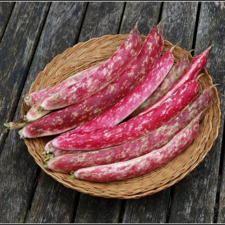 Climbing French Bean Seeds 'Borlotto'