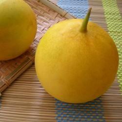 DOSAKAI indische Gurke Samen 1.75 - 2