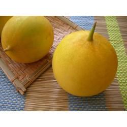 DOSAKAI indische Gurke Samen 1.75 - 5