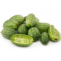 Semi di CUCAMELON - Cetriolino messicano 1.85 - 1