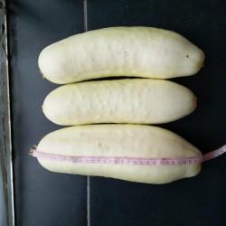Cucumber Seeds White Wonder 1.8 - 1