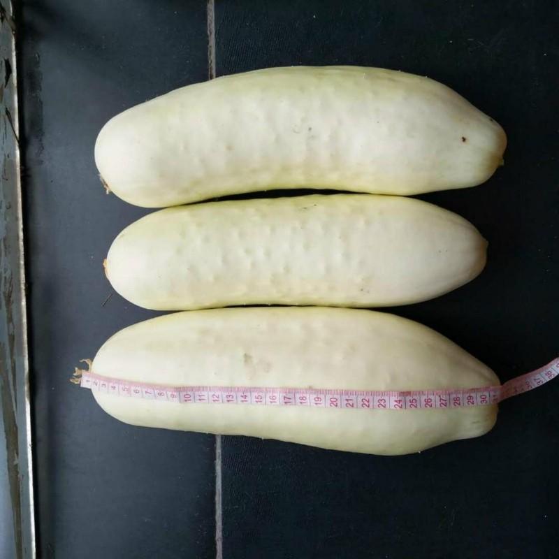 Graines Concombre blanc White Wonder 1.8 - 1