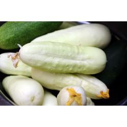 Семена огурца Белое чудо 1.8 - 2