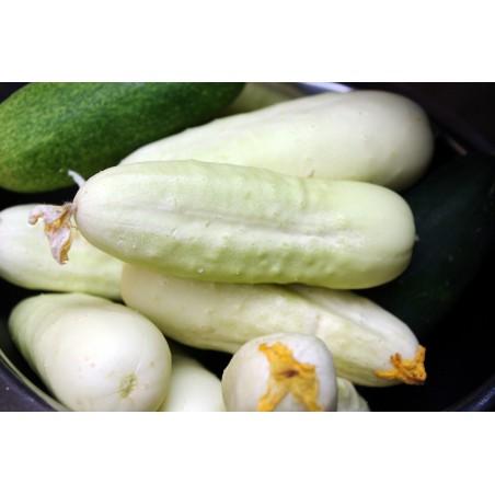Cucumber Seeds White Wonder 1.8 - 2