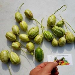 Ангу́рия, Арбузный огурец семена (Cucúmis angúria) 1.85 - 2