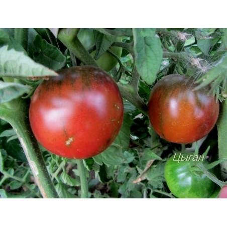 Zigan (Zigeuner, Gipsi) Tomaten Samen 1.65 - 3
