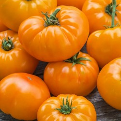 Sementes de tomate Laranja...