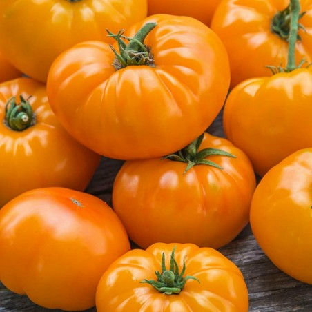 Orange Beefsteak Heirloom Tomato Organic Seeds