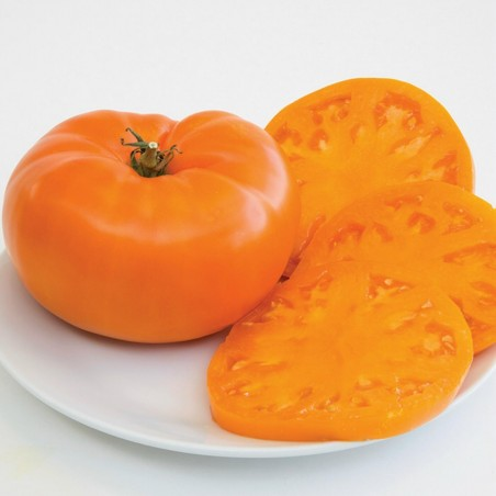 Orange Beefsteak Heirloom Tomato Organic Seeds 2.15 - 3