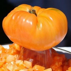Orange Tomate Samen Beefsteak Alte Sorte 2.15 - 2