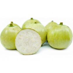 Tinda Seeds, Apple Gourd (Praecitrullus fistulosus) 2.35 - 2