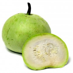 Tinda Kürbis Samen, Apfelkürbis (Praecitrullus fistulosus) 2.35 - 1