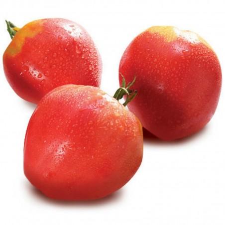 Tomatensamen VAL Sorte aus Slowenien