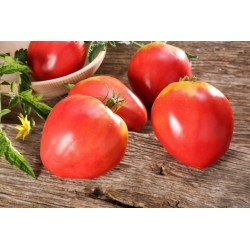 Semillas de Tomate VAL Variedades de Eslovenia 2 - 3