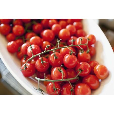 Paradiso Midi Rispen tomato seeds 1.85 - 3