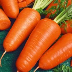 Graines de carotte Chantenay