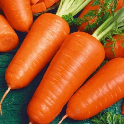 Red Cored Chantenay carrot...