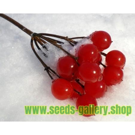 Graines Viorne trilobéeo Pimbina (Viburnum Trilobum)