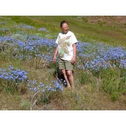 Linum perenne, Perennial Flax, Blue Flax Seeds 2.95 - 4
