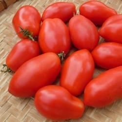 Sementes de Tomate Napoli 1.85 - 2