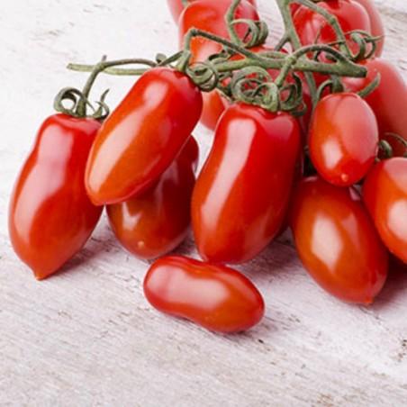 Napoli Tomate Samen 1.85 - 1