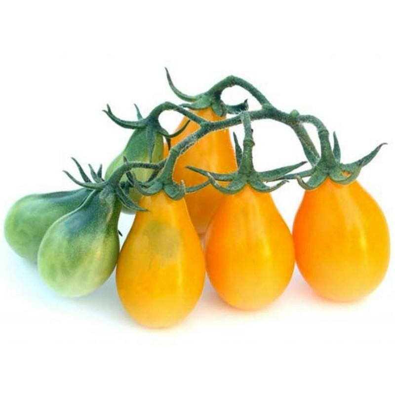 Yellow Pear, Gelbe Birnchen Tomaten Samen 1.95 - 1