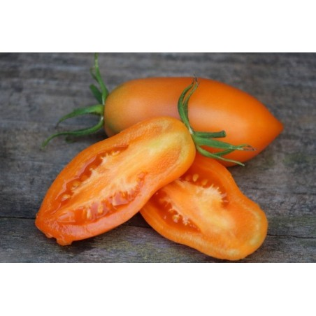 Graines De Tomate Banane Orange 1.85 - 3
