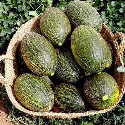 Sementes de Melão Pele De Sapo (Cucumis melo) 1.849999 - 2