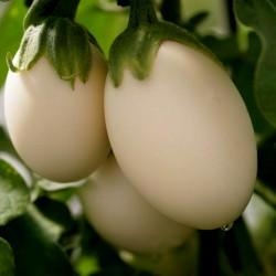 Eierbaum Samen (Solanum melongena) 1.85 - 2