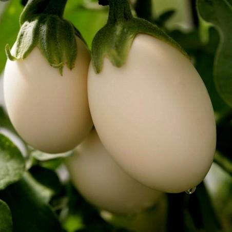 Баклажан Золотые Яйца семена (Golden Eggs) 1.85 - 2
