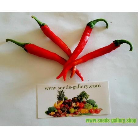 Σπόροι πιπεριά Cayenne Long Slim