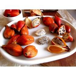 Semillas Jinguenga, fruta del cielo (Aframomum alboviolaceum) 3.45 - 3