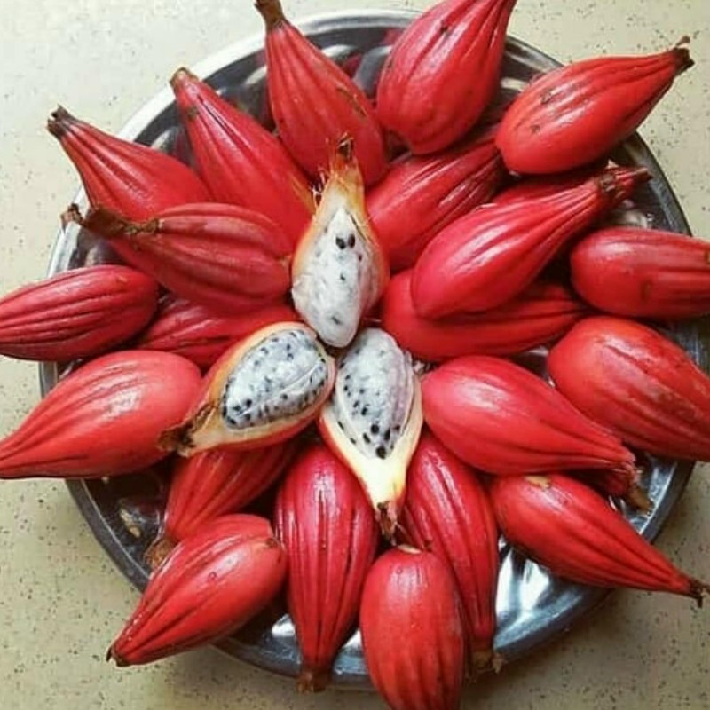 Semillas Jinguenga, fruta del cielo (Aframomum alboviolaceum) 3.45 - 1